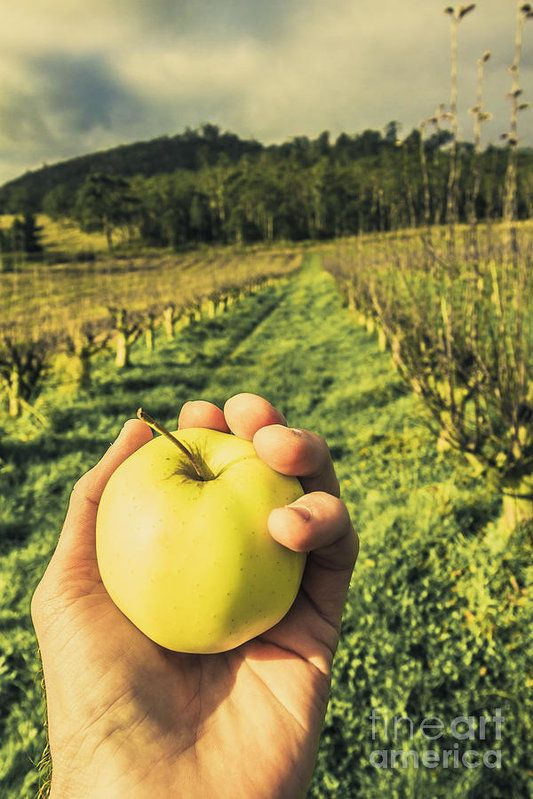 First person POV of a male hand holding green apple in front of
