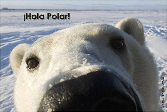 Ola polar.