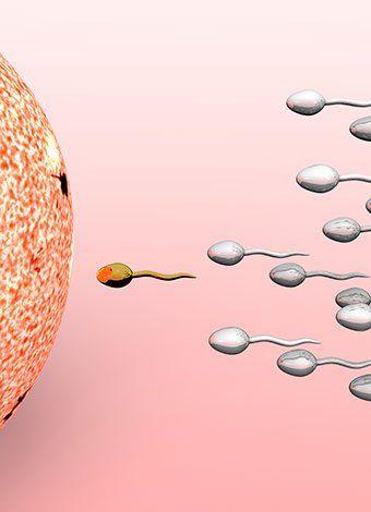 Fase lútea, ovulación