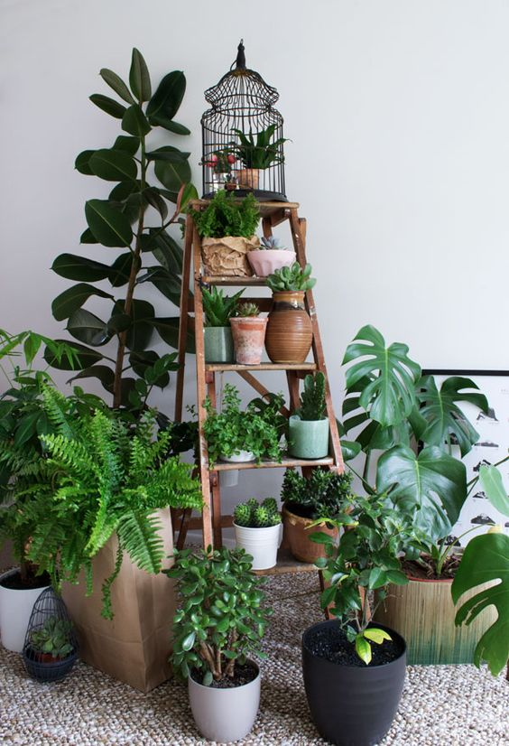 Urban Jungle Bloggers: My Plant Gang by @CurateDisplay: