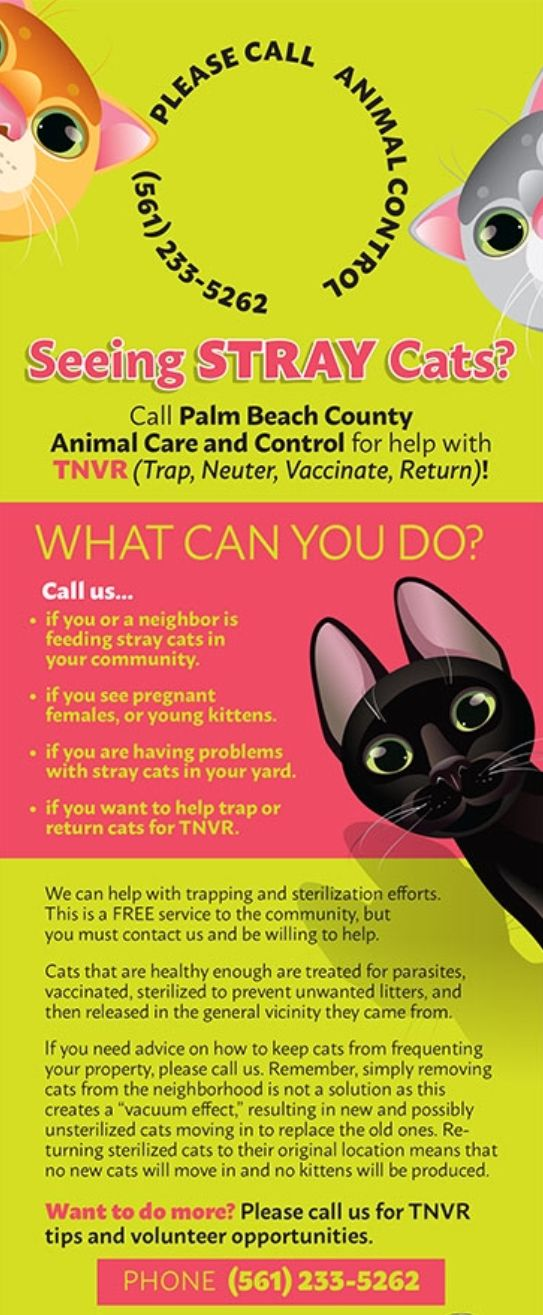 Find A Tnvr Location In Your Area Help Control The Cat Population In Your Neighborhood And Let Community Cats Survive In Peac With Images Cat Call Stray Cat Animal Rescue