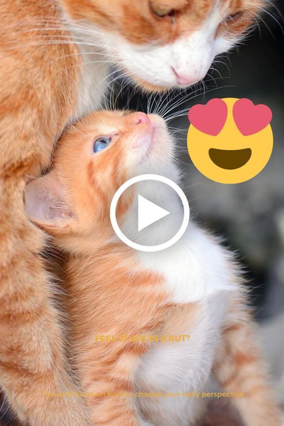 Cats Are So Funny You Will Die Laughing Funny Cat Compilation Sd0yj93n1x Cute Animals Animals Funny Cats And Dogs