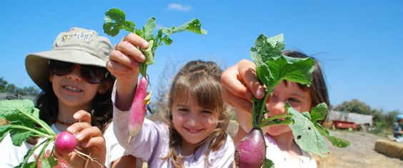 Bring your kids to Suzie's Farms! Look here how to sign up your student's whole class.