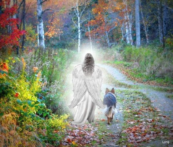 One day I'll be able to watchthis video collage. For now, I just love the image of this dog walking with an angel.