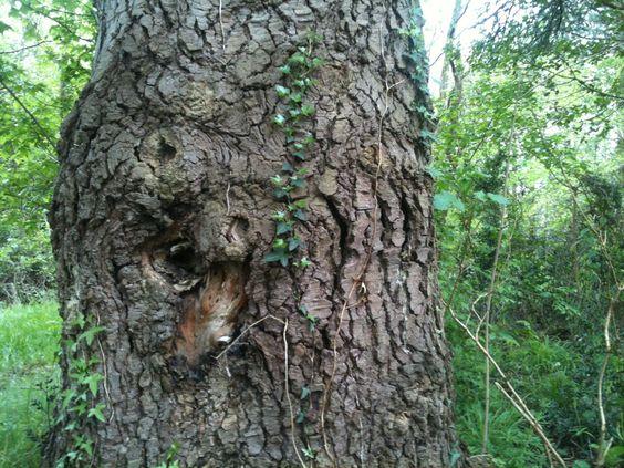 hello Twirly face tree, too much funy mushroom for breakfast ?