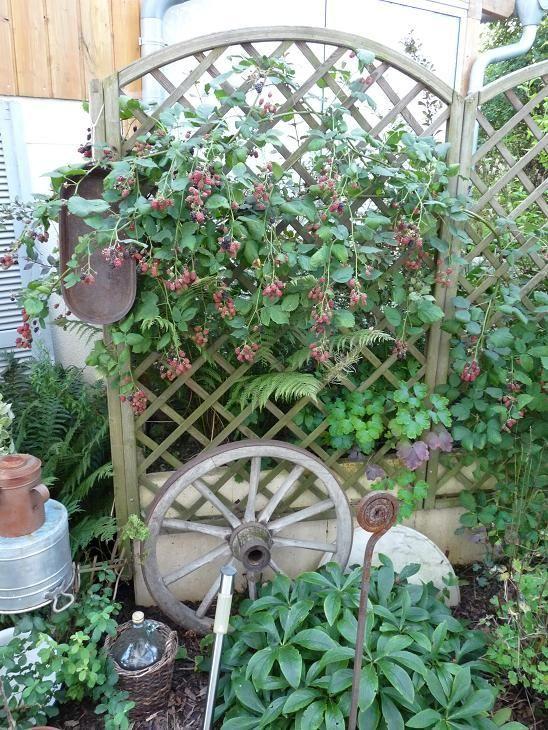 Pin Von Doris Hubner Auf Garten Gemuseanbau Garten Garten Ideen