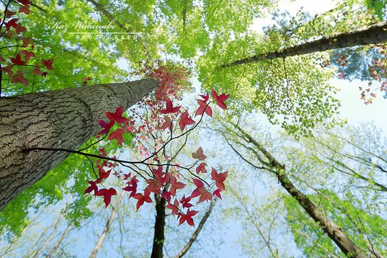 Red leaves in spring | par Kaz Watanabe