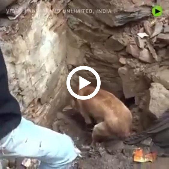 Mãe cão cava para resgatar seus filhotes