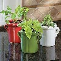 10 Herbs for Indoor Growing