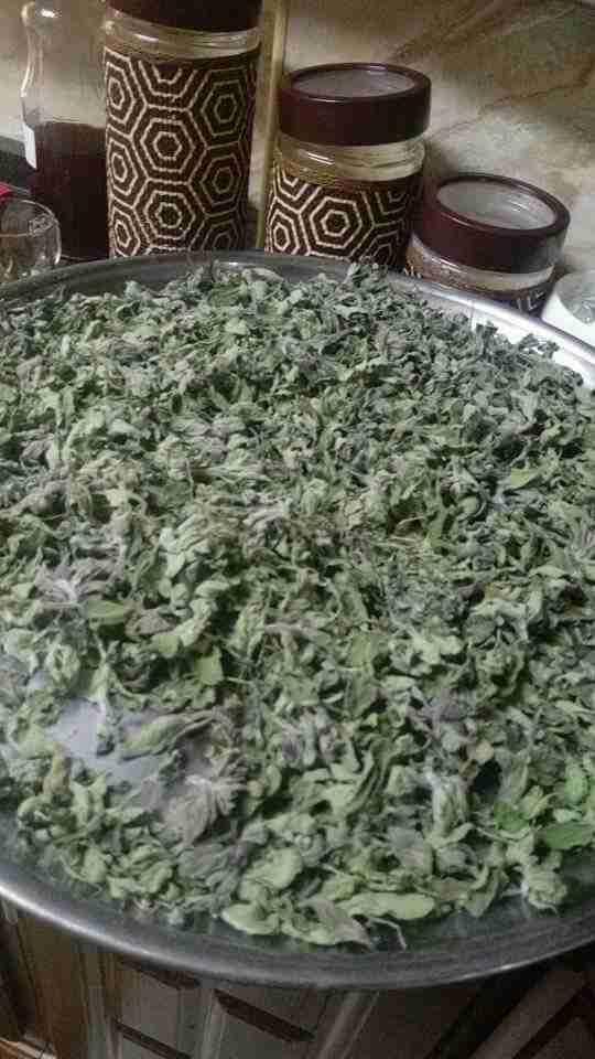 زعتر بلدي زاكي How To Dry Basil Herbs Basil