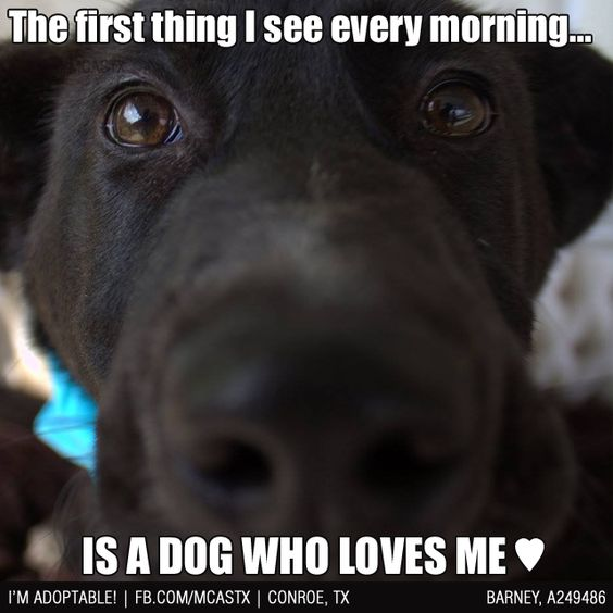 That morning view... ❤ #mcaspets #dogs #inyourface