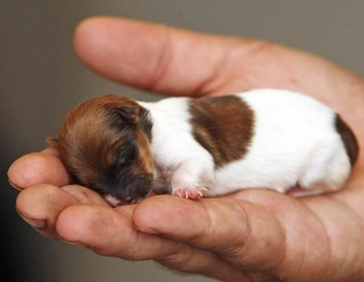 ♡ It's so easy to forget just how tiny newborn puppies are!