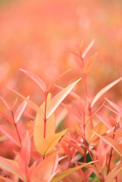hermosos colores de la naturaleza