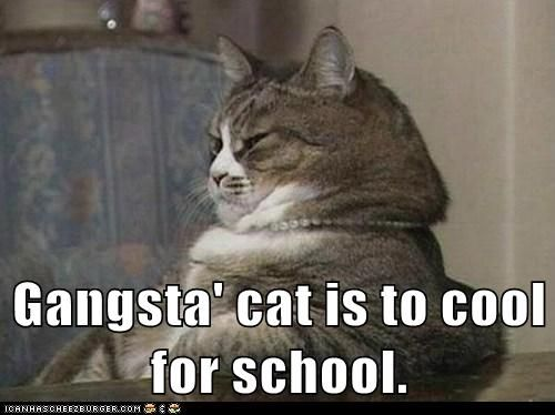 Gangsta Cat Is To Cool For School In 2021 Cats Funny Cat Memes Cat Memes