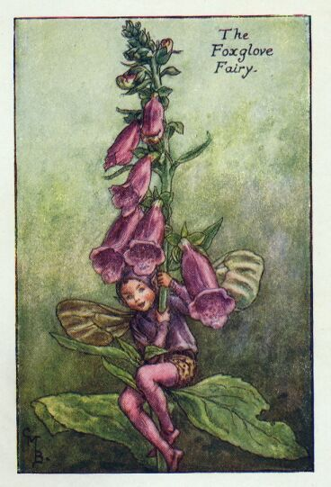 The Foxglove Fairy by Cicely Mary Barker