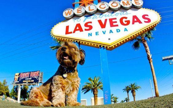 Oscar em Las Vegas