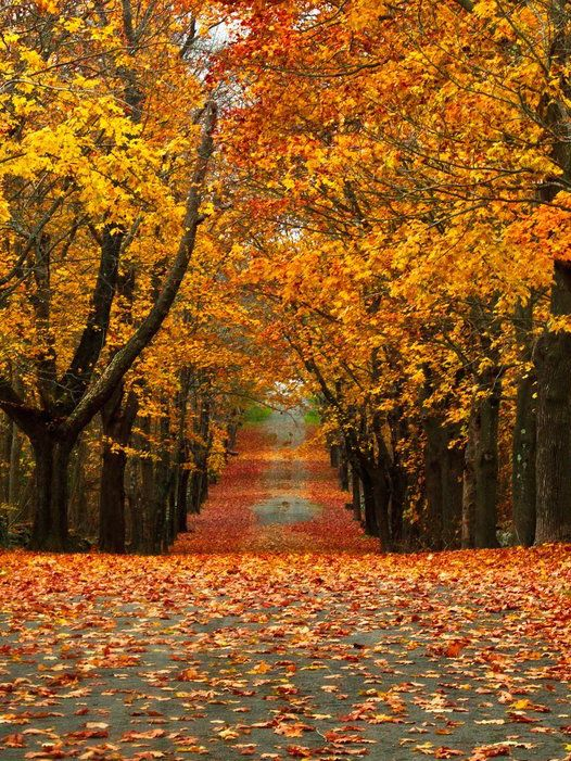 Image Gallery Most Beautiful Autumn Scenery