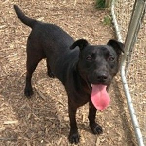 PLEASE someone give this cute little one a home!!!! Mojo, young dog that has been at Hancock County Humane Society, Findlay, OH since 10/12. Call (419) 423-1664