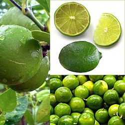 ESP PE: Lima • EN: Lime (?) • IT: - • LAT: ?