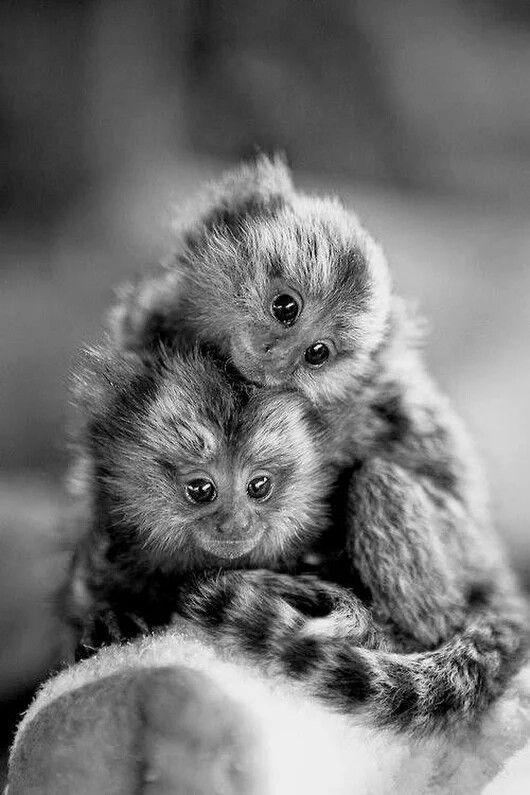 Pin Von Wanda Marin Auf Black White Photography Tiere Katzen