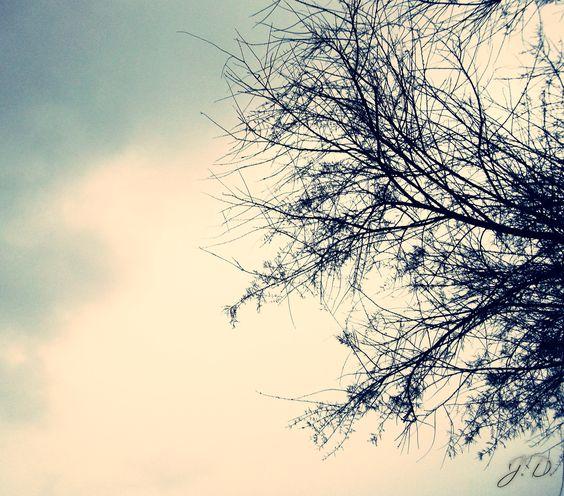 """""""Naked"""" tree and gray sky"""