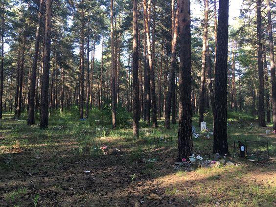 Могилки домашних животных на стихийном кладбище в лесу. Фото: Vladimir Shveda