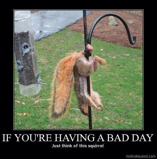 Funny Memes For Having A Bad Day : If you re having a bad day just think of this squirrel