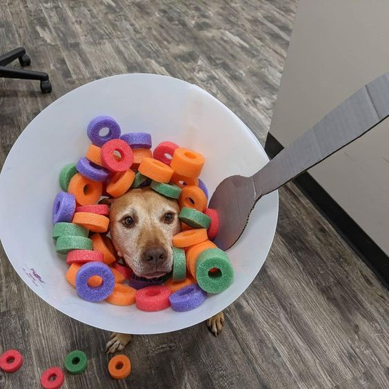 Bowl of Cereal Halloween Dog Costume