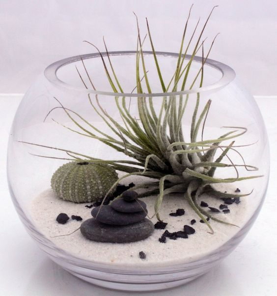 Small desktop zen garden terrarium kit with live Tillandsia fushsii air plant, white sand, sea urchin and stone stack- round fish bowl style. $44.00, via Etsy.: