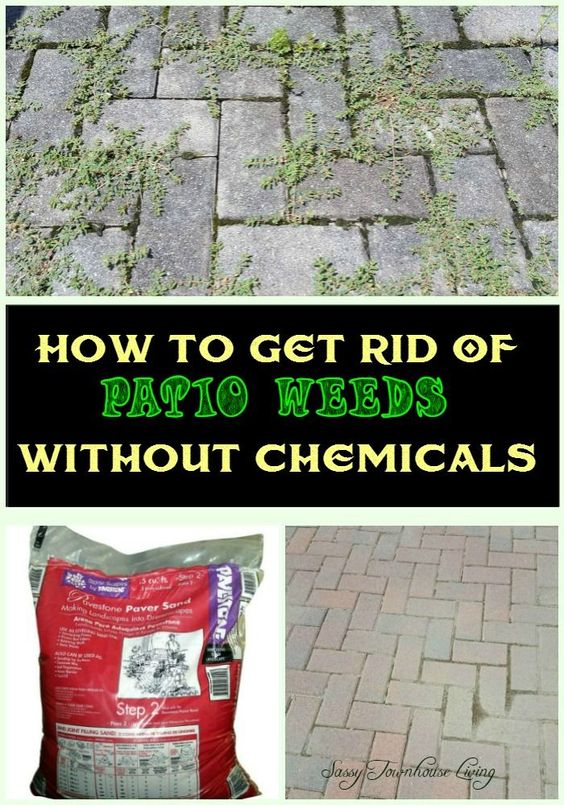 How to get rid of patio weeds without chemicals townhouse weed and gardening for How to get rid of weeds in garden