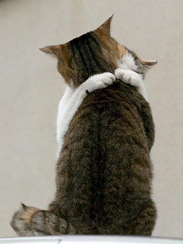 Hugs Are Always A Good Thing :)