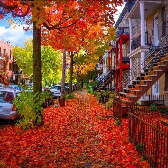 """Narcity Québec on Instagram: """"Montréal déroule le tapis rouge dans ses rues à l'automne. <div class="""