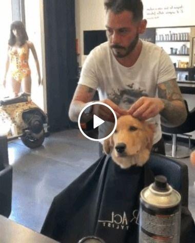 Cachorro  dando um togue no visual