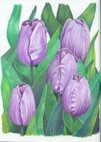 Lavendar Tulips by visque01