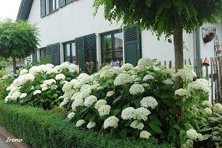 Hortensien on pinterest for Schattiger garten gestalten