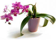 Как ухаживать за домашней орхидеей — Делимся советами