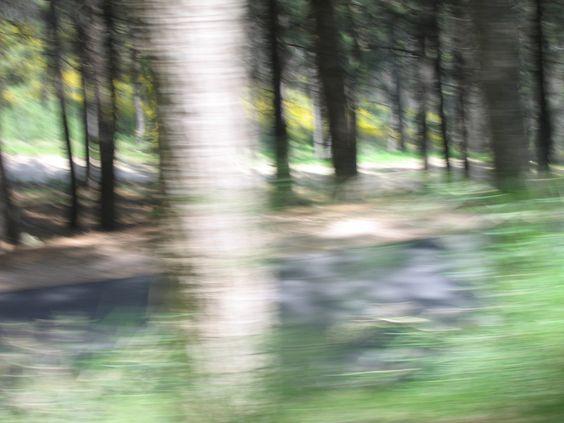 Amuka forest