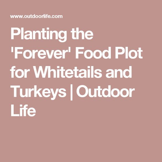 Planting the 'Forever' Food Plot for Whitetails and Turkeys | Outdoor Life
