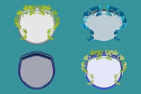 Download Free Vector - Organic Shields - Illustrator Design Asset Vector Download