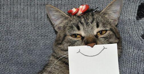 Os gatos tentam esconder seus sentimentos, mas um estudo recente descobriu que…