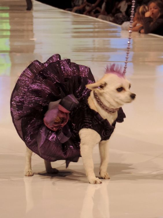 Designed for Le Chien Palm Springs Fashion Week El Paseo and worn by Stella, this wonderful party dress is made of a purple ribbon lace bodice and ruffled tiered skirt with lots of tulle to hold it out. It has a built in harness top so attach the leash and go. To give you a feel for Le Chien, I included pictures of the
