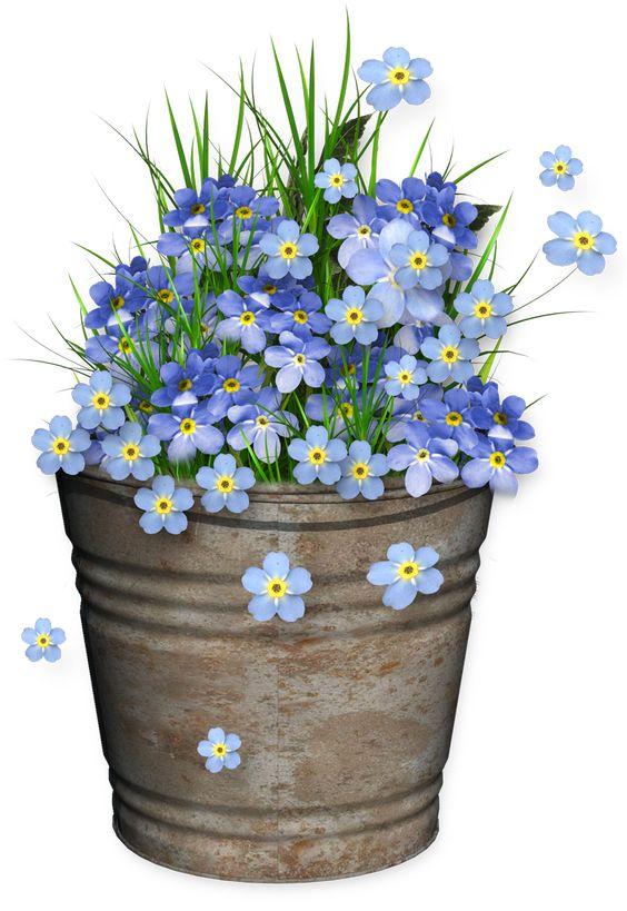 cubeta con flores                                                                                                                                                                                 Más: