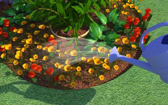Starting a backyard flower garden