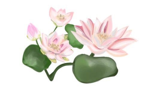 最高の壁紙 最も検索された 蓮 イラスト 無料 蓮 イラスト 花 イラスト 無料 イラスト