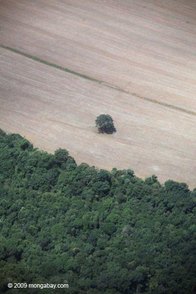 Gallery of Amazon Deforestation