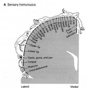 Anatomy and Pathophysiology