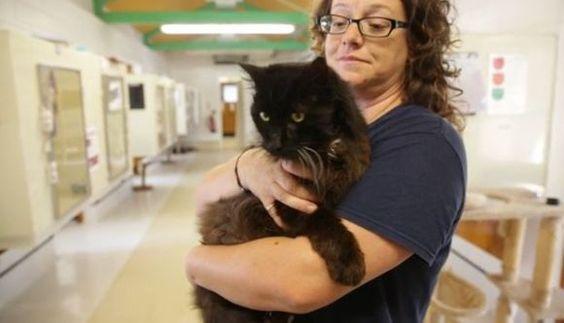 「猫には9つの命がある」とも言われるが、なかには、1回の人生で3回分は生きてしまうニャンコもいるようだ。  というのも、捨てられていた猫ちゃんの年齢が27歳だという …