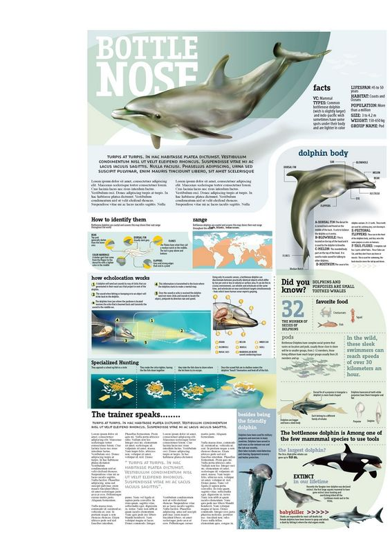 This interesting infographic poster highlights some of the interesting facts about well-known bottlenose dolphins.