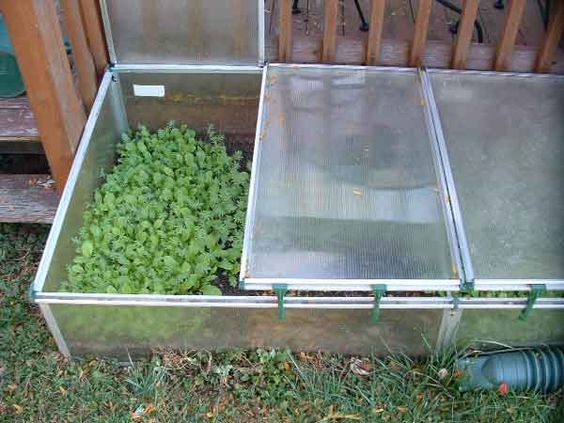 How to use cold frame to shelter your plants | How To Build Cold ...