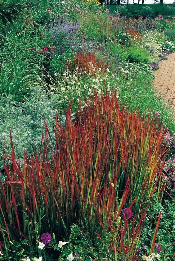 Decorative grasses for landscaping garden landscaping for Best ornamental grasses for landscaping